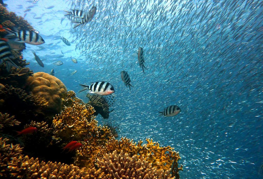 diving immersioni in sicilia2