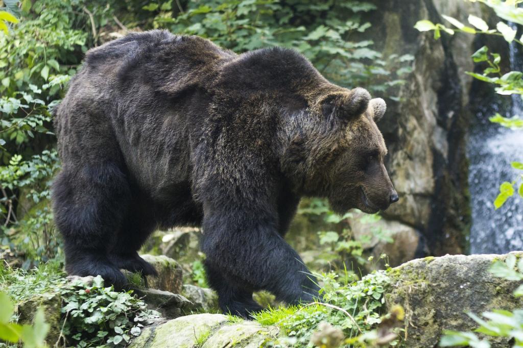 Parco Faunistico Spormaggiore vedere gli animali in Trentino HotelAlpen ANDALO2