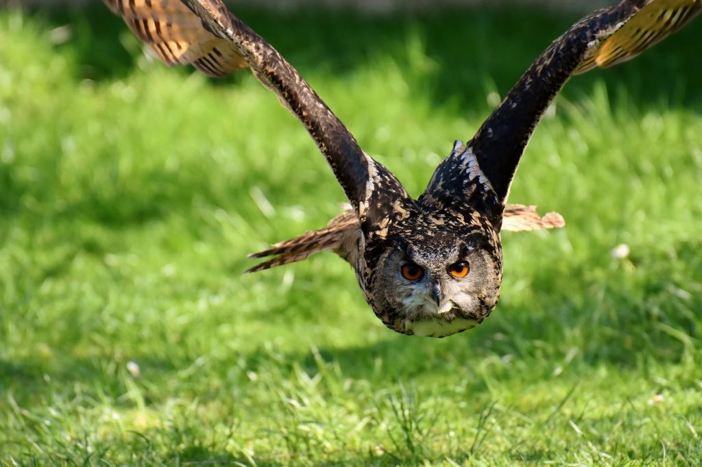 Parco Faunistico Spormaggiore vedere gli animali in Trentino HotelAlpen ANDALO