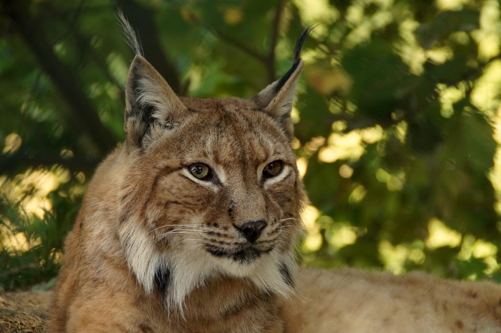 Parco Faunistico Spormaggiore vedere gli animali in Trentino HotelAlpen ANDALO1